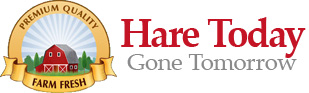 Hare Today, Gone Tomorrow